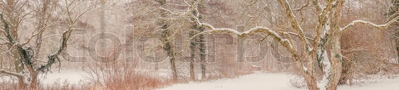 Stock image of 'Panorama of a magical forest covered with snow in the winter'
