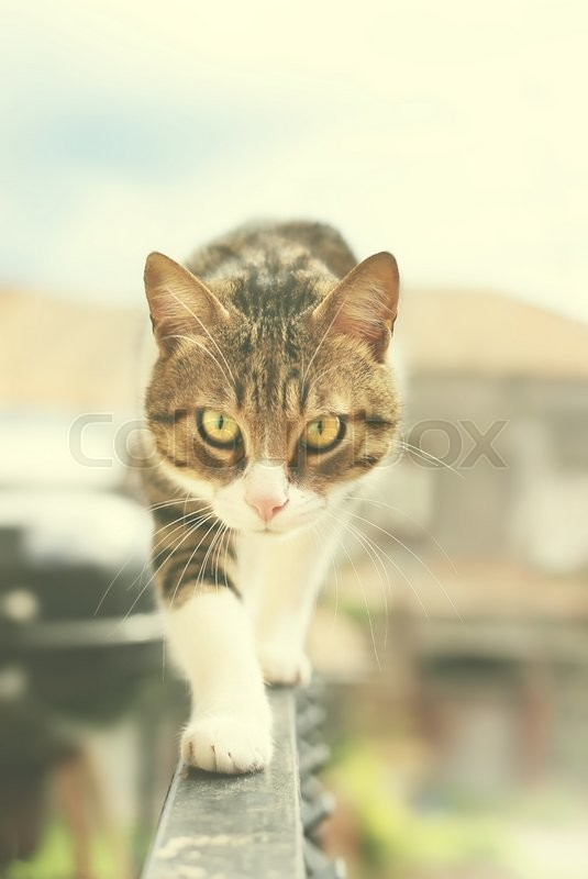 Stock image of 'Photo of cat outside'