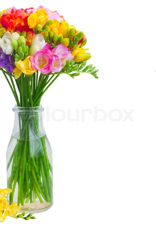 Stock image of 'Fresh freesia flowers in glass  close up  isolated on white background'