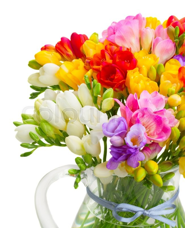 Stock image of 'Bunch of multicolored  fresh freesia flowers close up isolated on white background'