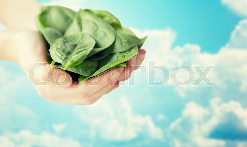 Stock image of 'healthy eating, dieting, vegetarian food and people concept - close up of woman hands holding spinach over blue sky and clouds background'