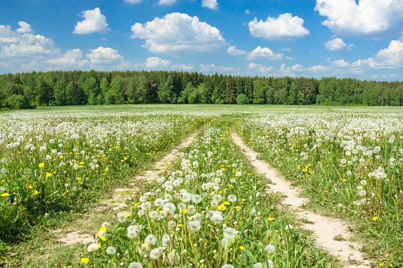 Stock image of 'summer rural landscape with a blossoming meadow, the road and the blue sky'
