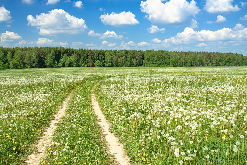 Stock image of 'spring  rural landscape with a blossoming meadow, the road and the blue sky'