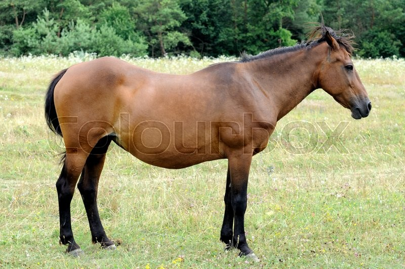 Stock image of 'The horse is grazing in the pasture.'