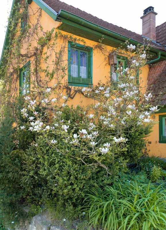 Stock image of 'idyllic overgrown house detail at a village in Hohenlohe named Baechlingen'