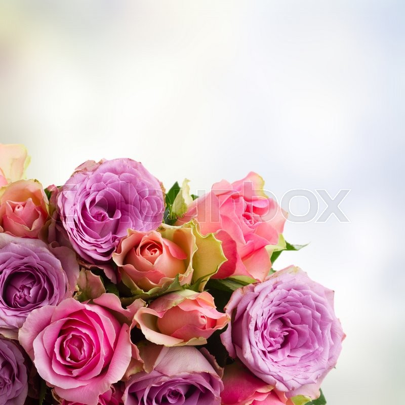 Stock image of 'border of pink and violet  fresh roses  on blue  bokeh background with copy space'