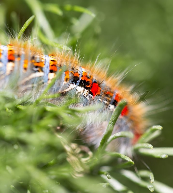 Stock image of 'Caterpillar on a plant in the nature. macro'