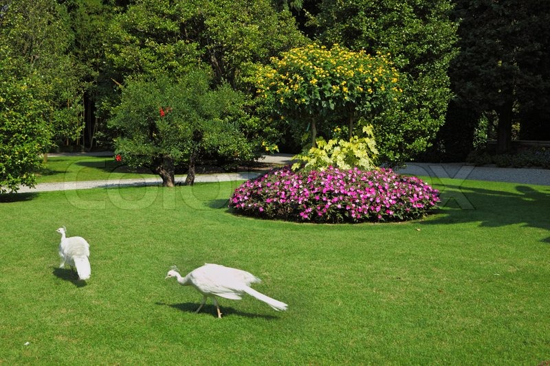 Luxury Park two white peacocks this luxury park on an island in lake maggiore