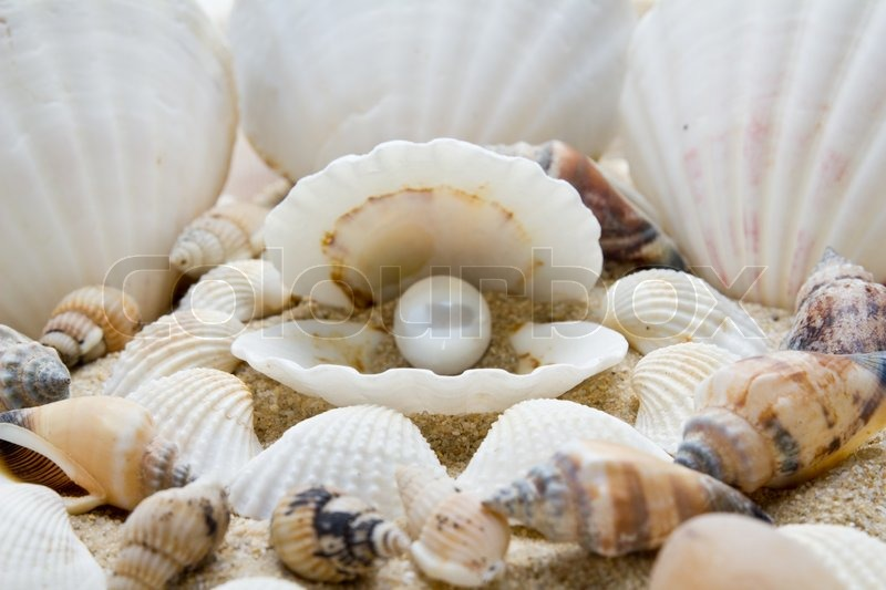 Pearl on the seashell the exotic sea shell treasure for Animals made out of seashells