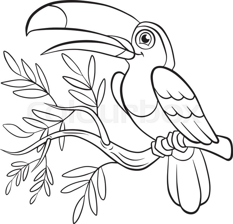 Coloring Pages Birds Little Cute Toucan Sits On The Tree Banch And Smiles
