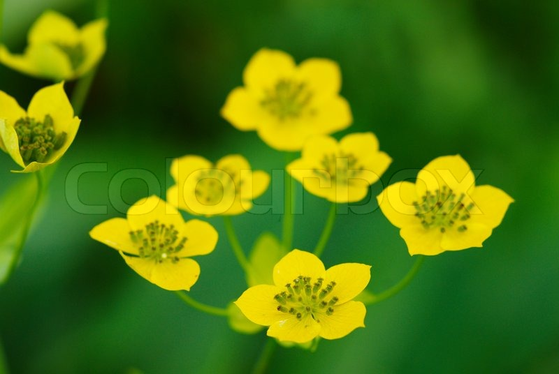 Many Small Wild Yellow Flowers Stock Images Page Everypixel