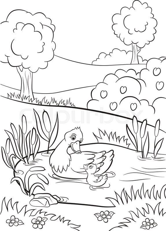 coloring pages kind duck and little cute duckling swim on the pond there are trees bushes flowers and reeds around summer vector