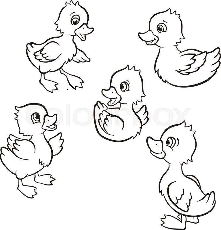 Coloring pages. Five little cute ducklings swim on the
