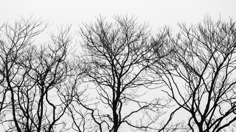 Stock image of 'Black and white of dry tree background'
