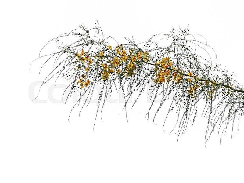Stock image of ' Close up of branch     '