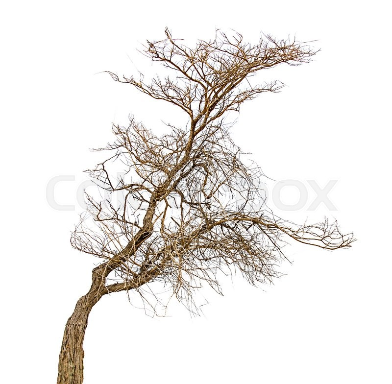 Stock image of 'Tree on white background'