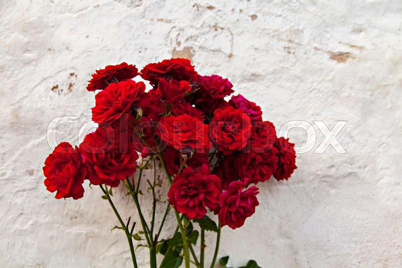 Stock image of 'Image of red garden roses by white stone wall. '