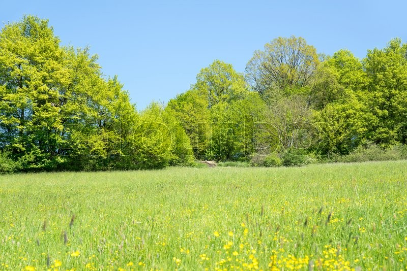 Stock image of 'sunny illuminated idyllic rural springtime scenery in Hohenlohe, a district in Southern Germany'