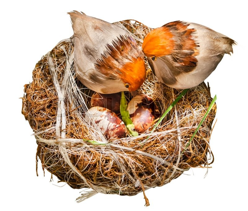 Stock image of 'Nests of birds'