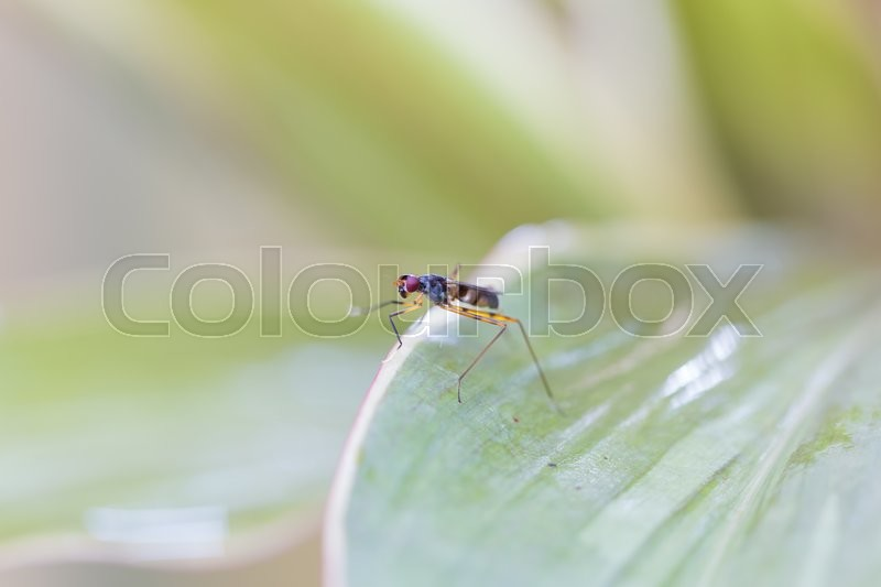 Stock image of 'Insect perched on leaves Macro small insect perched on a leaf.'
