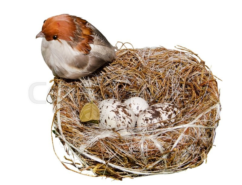 Stock image of 'Nest's bird with egg on a white background'