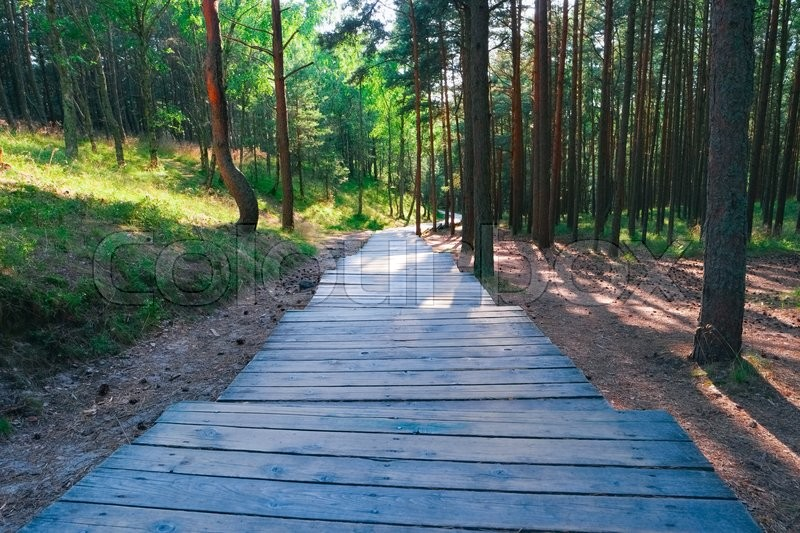 Stock image of 'Wooden path through pine trees in forest'