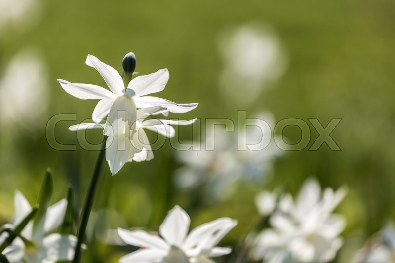 Stock image of 'flowers, nature, outside'