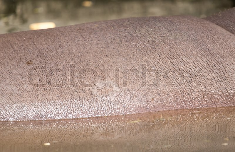 Stock image of 'Hippopotamus leather as a background'
