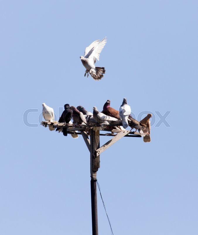 Stock image of 'Flock of pigeons on blue sky'