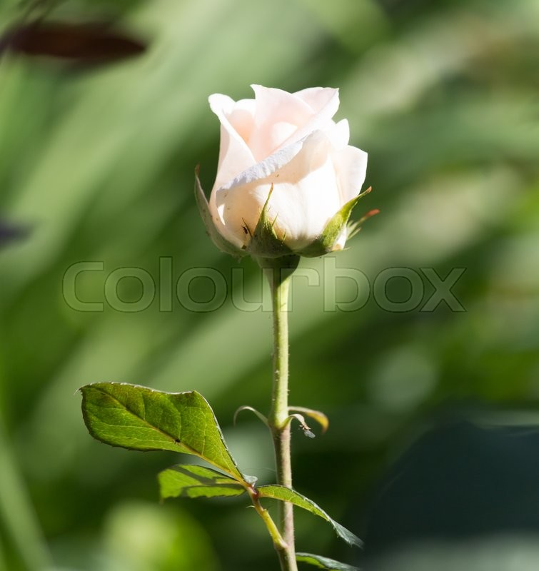 Stock image of 'Beautiful white flower in nature'