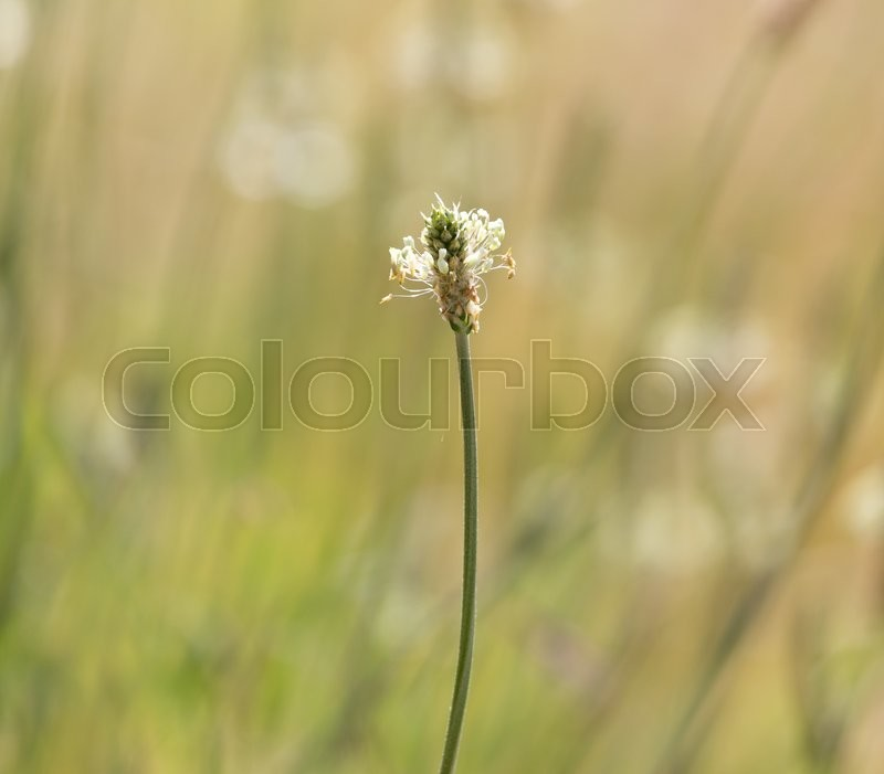 Stock image of 'Stalk of flower on grass'