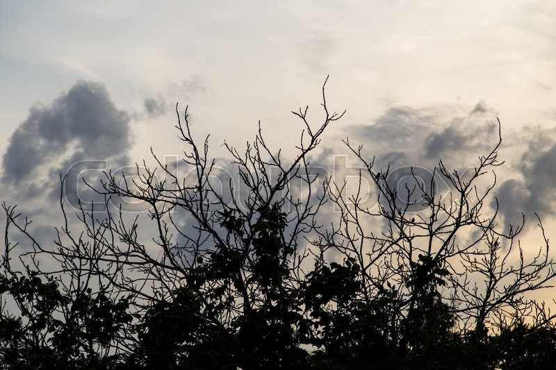 Stock image of 'Bare branches of the trees on the sunset background'
