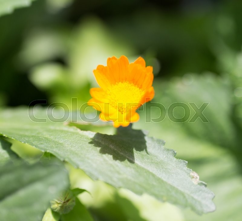 Stock image of 'Beautiful orange flower in nature'