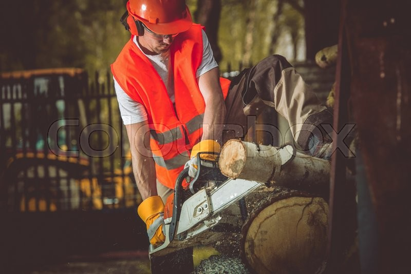 Stock image of 'Wood Cut Lumber Works. Caucasian Men with Wood Cutter in Action.'