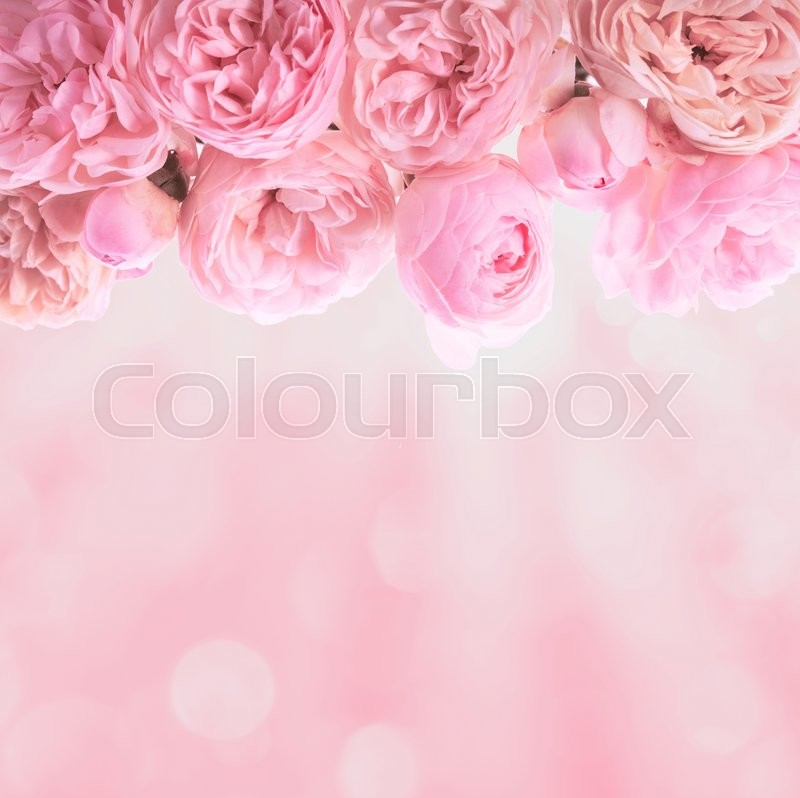 Stock image of 'Pink roses border wedding background for design'