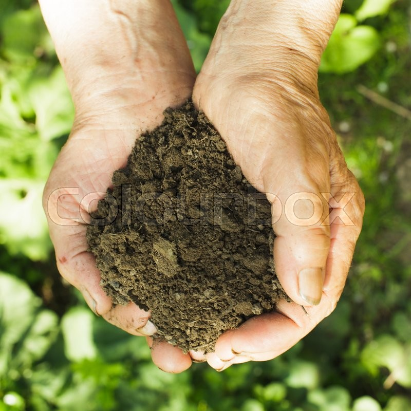 Stock image of 'Hands of old woman with soil and plant. Symbol of life.'