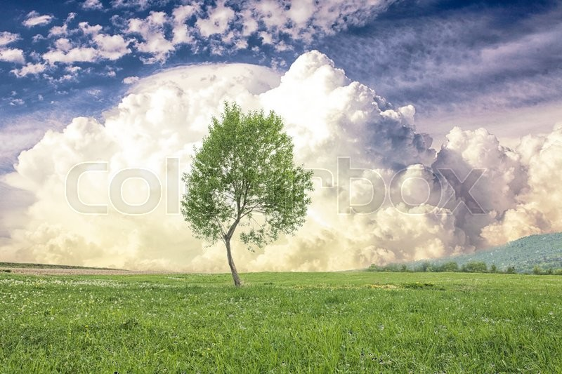 Stock image of 'Lonely tree on the green spring meadows in the mountains over cloudy sky'