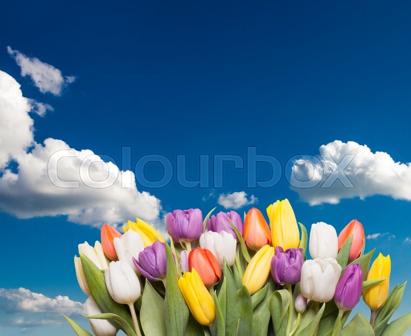 Stock image of 'Color tulips over sky with copy space for design'