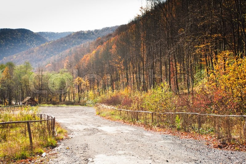 Stock image of 'Wonderful landscape majestic forest in autumn season'
