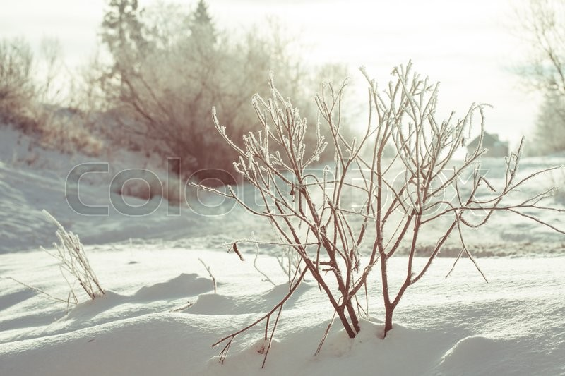Stock image of 'Frozen bush covered with snow in winter landscape'