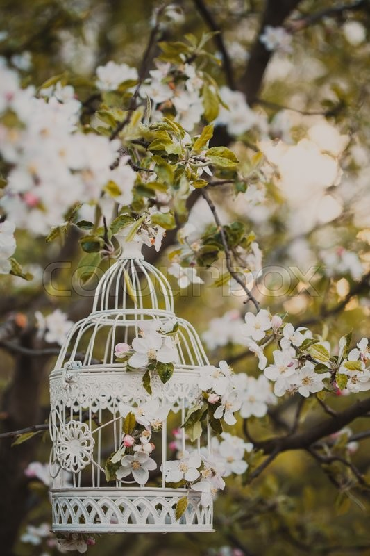 Stock image of 'Bird cage on the apple blossom tree in sunset.'