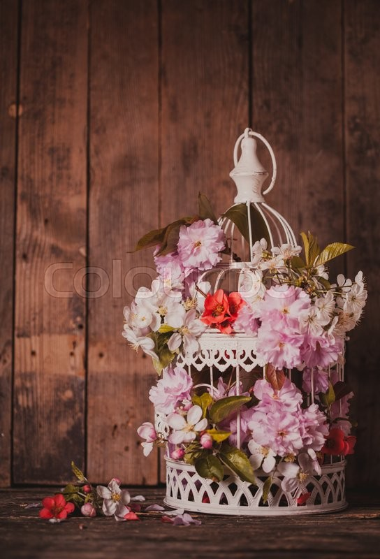 Stock image of 'Bird cage with spring blossom of sakura and fruit flowers. Wedding decorations with copy space'