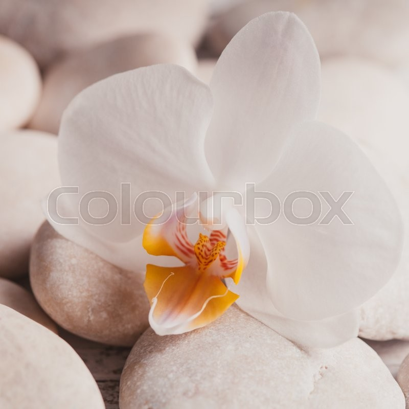 Stock image of 'White orchid on the rebbles, spa concept'