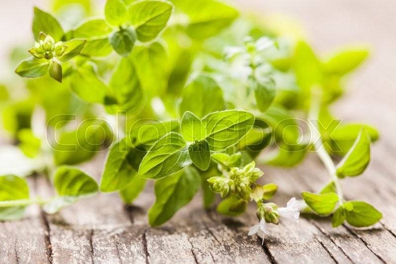 Stock image of 'Fresh oregano green twigs prepared for drying'