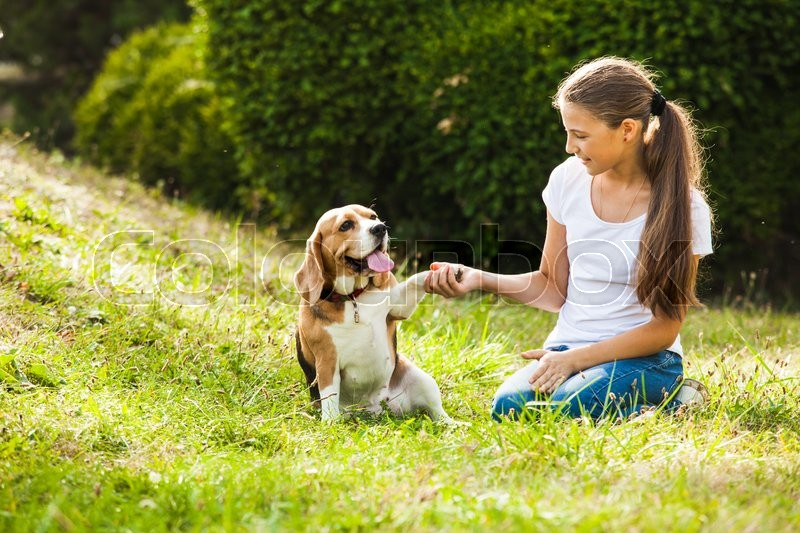 Stock image of 'Girl is sitting with beagle dog on the grass'