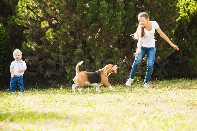 Stock image of 'Funny girl throwing stick for active beagle dog in the park'