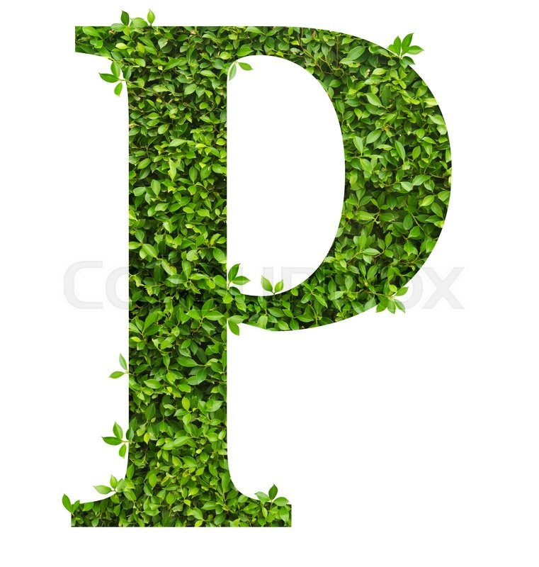 Stock image of 'Letter P , alphabet of green leaves on white background'