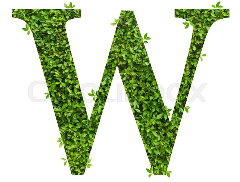 Stock image of 'Letter W , alphabet of green leaves on white background'