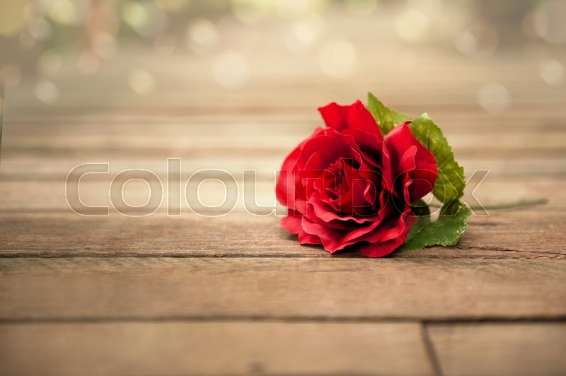 Stock image of ' Rose  lying down on a wooden floor'