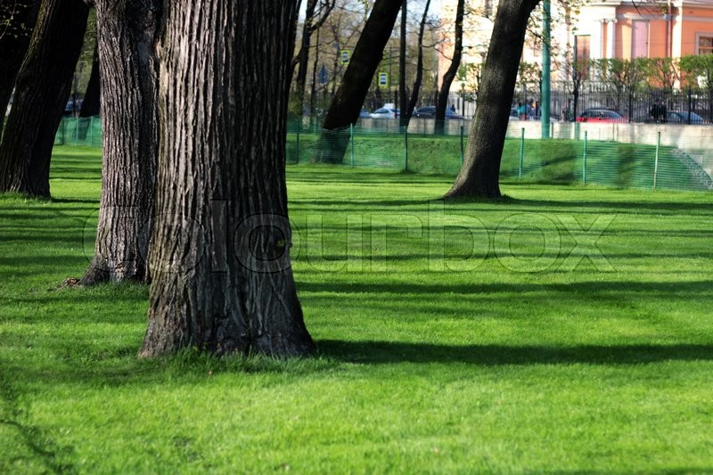 Stock image of 'trees and green grass in the park'